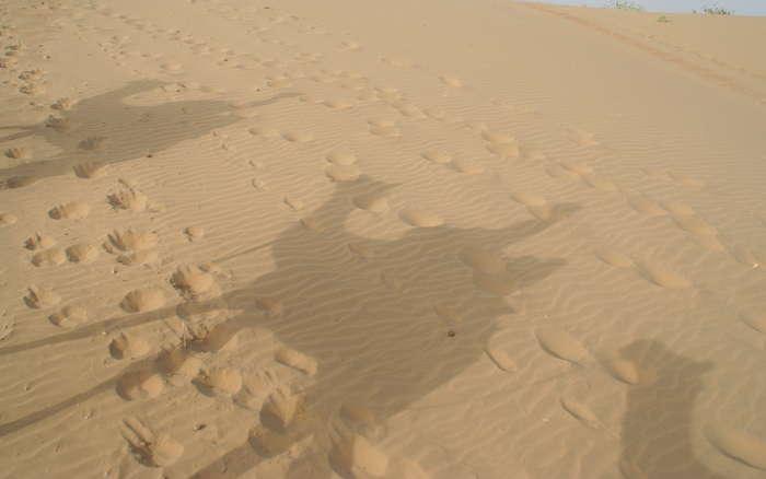 Sombras de los camellos